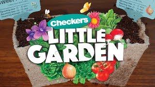 Checkers Little Garden