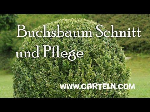 search result youtube video buchsbaum schnitt. Black Bedroom Furniture Sets. Home Design Ideas