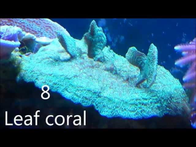 10 easy to keep reef tank corals for biginners