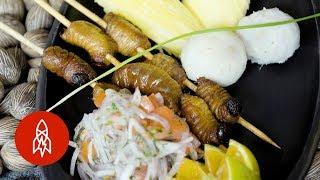 Gourmet Worms: The Amazon's Secret Ingredient