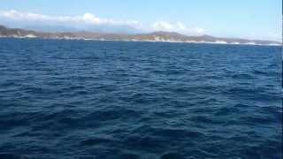 preview picture of video 'Familia de Orcas en Huatulco Mexico'