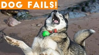 Dogs Have a Ruff Life Funny Fails Comp April 2018 | Try Not to Laugh Animals Funniest Pet Videos