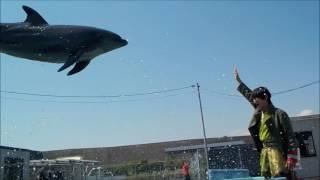 (ブログ用動画)ドルフィントレーナージャンプ!《室戸ドルフィンセンター編》