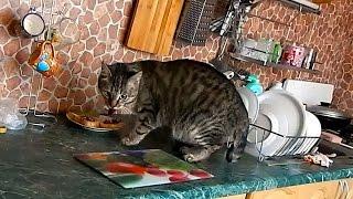 Кот спалился! Кот воришка! / Кот ворует еду со стола / Cat steals food from the table/