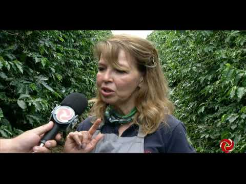 Produtora de Areado produz café especial