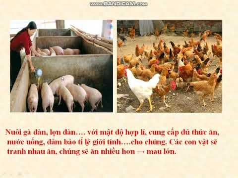 Ôn tập Sinh học 9 (Bài 44)- cô Kim Anh