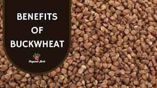 Top 10 Health Benefits Of Buckwheat   Benefits Of Buckwheat