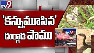 దుర్గాడలో కన్నుమూసిన పాము || దుర్గాడ - TV9 Exclusive