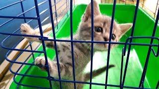 КОТ МАКС ЗА РЕШЕТКОЙ. Смешная история котёнка