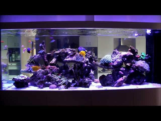 My 1500L (400 US Gallon) Mixed Reef Tank