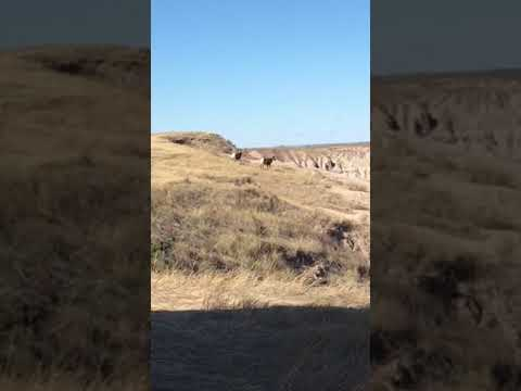 "Video Of ""The Wall"" Dispersed camping just outside Badlands, SD"