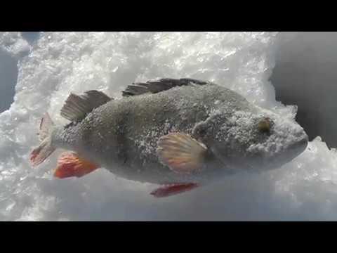 Февральская рыбалка на Волге