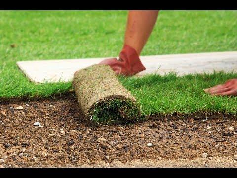 Грунт под рулонный газон