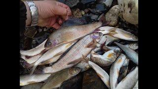 Рыбалка в приморье на хариуса и ленка