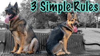 3 Things to Remember When Training Your German Shepherd!