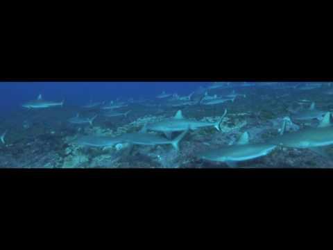 Tauchreise Franzoesisch Polynesien 2011, Rangiroa allgemein,Französisch-Polynesien