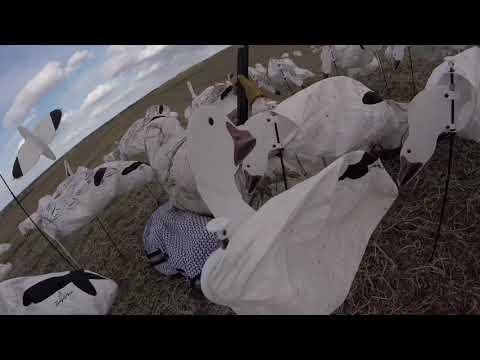 30-bird-snow-goose-hunt