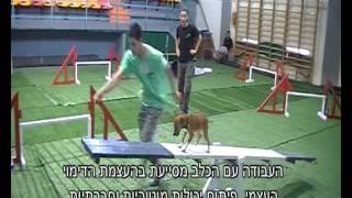 טיפול בעזרת כלבים - טיפול בעזרת בעלי חיים - תחרות פארא-אג'יליטי אשדוד 2011