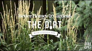 Ornamental Grasses   The Dirt   Better Homes & Gardens