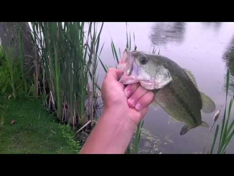 Fishing In Ponds For Spawning Bass With The Havoc Pitt Boss