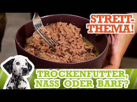 Hunde richtig füttern - BARF? Nassfutter? Trockenfutter? Was ist am Besten?