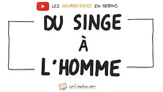 Vignette de [VIDÉO] DU SINGE À L'HOMME - Les neurosciences en dessins