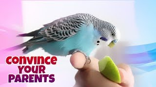 How to Convince Your Parents to Get a Bird?