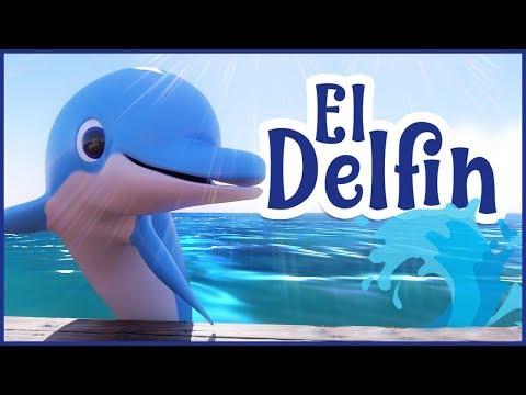 Delfin és az emberi látás. Emberi delfin látvány