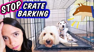 STOP Puppy Crying in Crate 🛑  How To Crate Train a New Puppy!