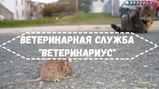 Как кошки охотятся на мышей