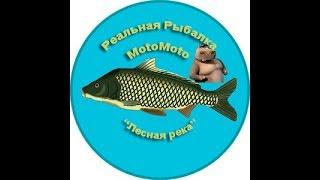Как поймать уклейку в реальной рыбалке на лесной реке