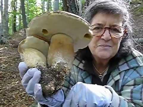 Trattamento di un fungo di unghie clinica fissa Mosca