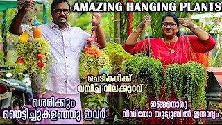 Fast Growing Hanging Plants|Homely Hanging Garden|beautiful Cascading Plants In Malayalam