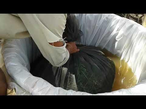 បច្ចេកទេសធ្វើជីកំប៉ុស្តទឹក_ How to do Liquid compost (by Sok Sophal)