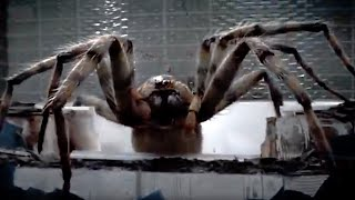 Giant Spider Attack! | Arachnids In The UK | Doctor Who