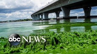 Toxic Algae Bloom Cancels Some Florida July 4th Celebrations