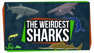 7 of the Most Uniquely Fierce Sharks