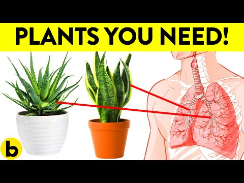 , title : '8 Healthiest Plants To Have In Your House
