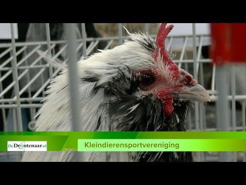VIDEO | Kleindierensportvereniging vergrijst, maar van opheffen is geen sprake