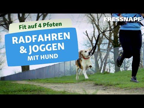 Joggen und Radfahren mit Hund