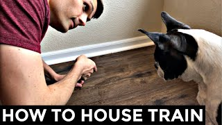 How To Potty Train A Boston Terrier - 5 Steps To Housebreak Your Dog