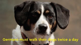 Walkies - Germany's dog owners must walk their pets twice a day.