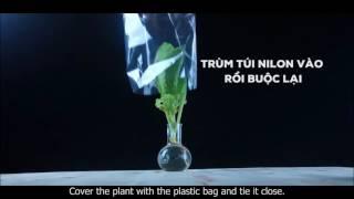 Thí nghiệm về sự thoát hơi nước ở lá