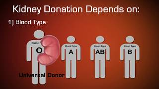 What does it take to be a living kidney donor?