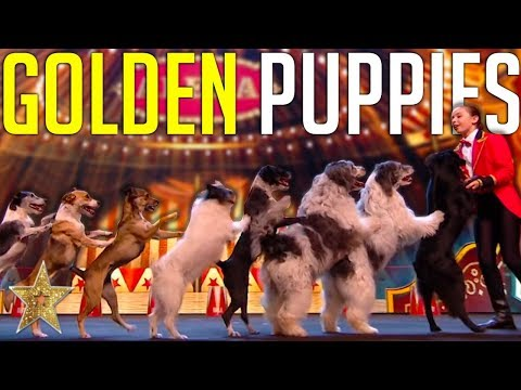 GOLDEN BUZZER Audition Is Crowned The BEST DOG ACT EVER By Simon Cowell! | Got Talent Global (видео)