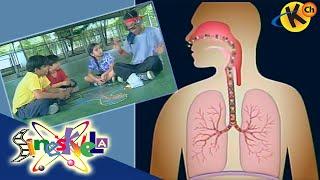 Respiratory System: Mechanism of Breathing