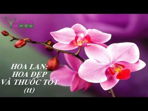 Hoa đẹp và thuốc tốt ( tiếp theo)