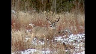 Shooters Ep. 4 | Deer Hunting in Alabama, Mississippi and Saskatchewan
