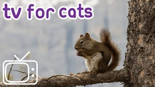 NEW Cat TV! Birds, Squirrels and More for Your Cat to Watch!
