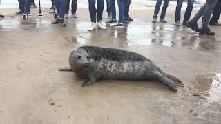 Тюлень ругается :)